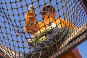 Прокуратура сочла незаконным «мировое соглашение» между ФАС и рыболовной компанией ДМП-РМ